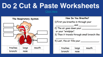 Respiratory System Powerpoint (Includes TWO Worksheets)