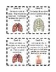 Respiratory System Scavenger Hunt