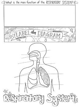 Respiratory System Sketch Notes