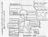 Respiratory System Sketch Notes | Human Body Systems | Science Coloring