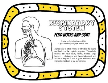 Respiratory System Sort and Foldable
