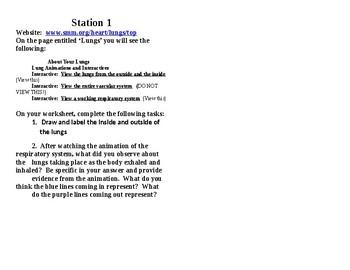 Respiratory System Station Lab