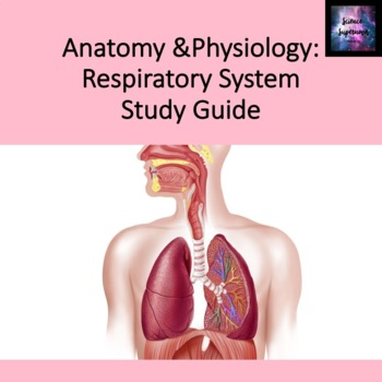 Respiratory System Study Guide