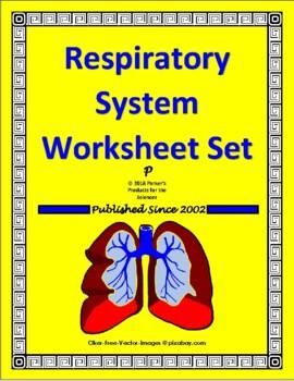 respiratory system study guide set test by parker s products for rh teacherspayteachers com respiratory system study guide worksheet respiratory system study guide anatomy