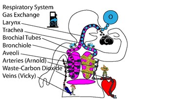 Respiratory System  -Supplemental Aid