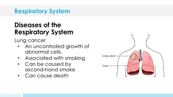 Respiratory System - Supplemental Lesson - No Lab