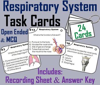 Respiratory System Task Cards: Pharynx, larynx, trachea, bronchioles etc.