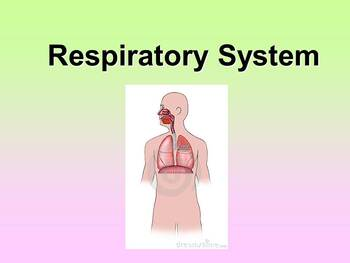Respiratory System Teacher and Student Fill-in Notes