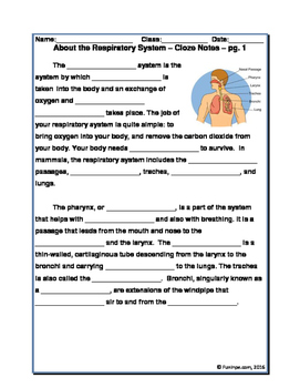 Respiratory System Unit: Worksheets, Notes, Activities, Rdg Comp & More