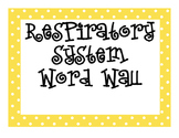 Respiratory System Word Wall