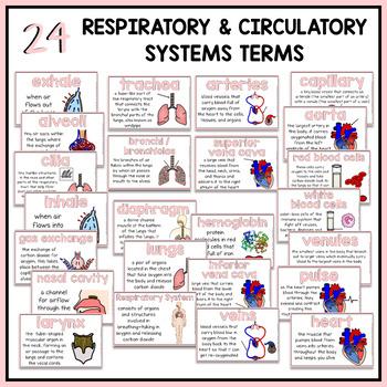 Respiratory System Word Wall | Circulatory System Word Wall
