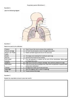 Respiratory System Workhseet 2