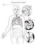 Respiratory System Worksheet