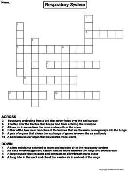 respiratory system worksheet crossword puzzle by science spot tpt. Black Bedroom Furniture Sets. Home Design Ideas