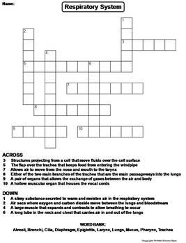 Respiratory System Worksheet/ Crossword Puzzle