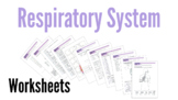 Respiratory System Worksheets
