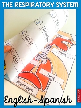 Respiratory System fold and learn