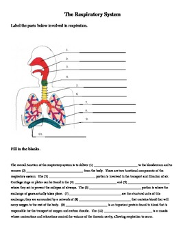 Respiratory System Labeling and Cloze Worksheet by jer520 | TpT