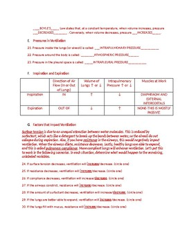 Respiratory System worksheet with key for College A&P course