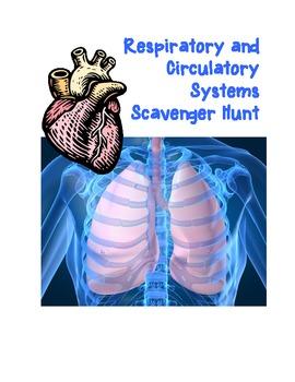 Respiratory and Circulatory Scavenger Hunt
