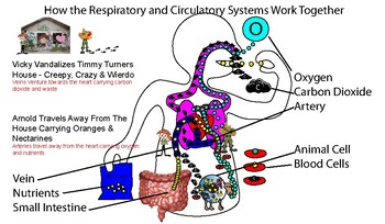 Respiratory and Circulatory System - Supplemental Aid