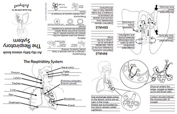 Respiratory system Foldable (Science, Anatomy)