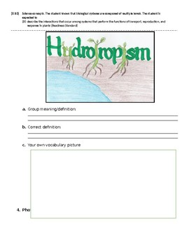 Response in Plants Vocabulary Picture / Word Wall