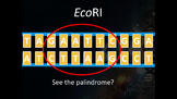 Restriction Enzyme EcoRI Animation