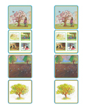 Retell Anchor Text - Journey's Lesson 24 A Tree is a Plant