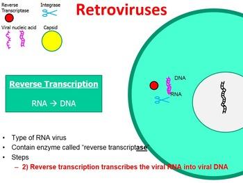 Retrovirus PowerPoint (with free handout)