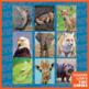 Reveal a Picture VIPKid Animal Reward