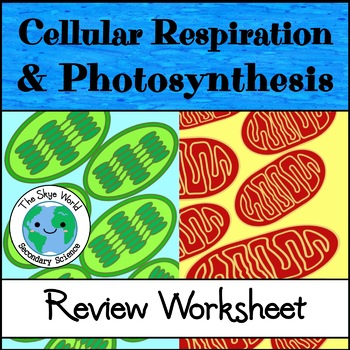 Cellular respiration and photosynthesis teaching resources review cellular respiration and photosynthesis review cellular respiration and photosynthesis fandeluxe Gallery