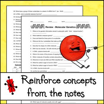 Review - Molecular Genetics