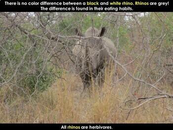 Rhino - Interactive PowerPoint presentation