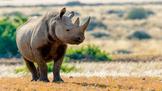 Rhino Virtual Lesson