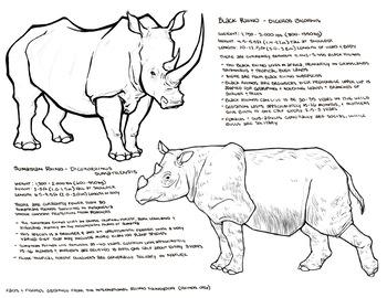 Rhinos information sheet