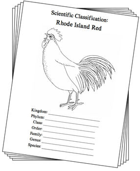 Rhode Island State Bird Notebooking Set (Rhode Island Red)