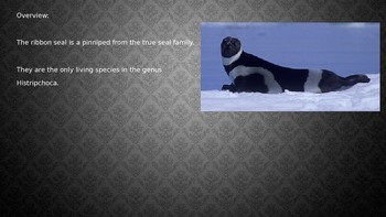 Ribbon Seal - Power Point - facts information review pictures