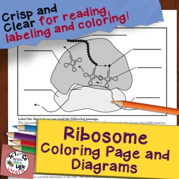 Ribosome Cell Diagram Coloring Page and Reading Page