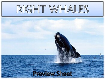Right Whales - Mini Unit