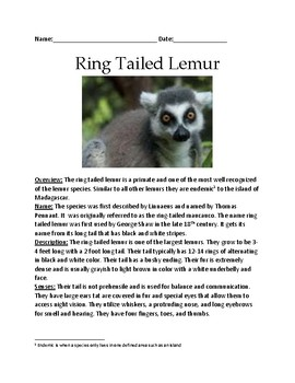 Ring Tailed Lemur - lesson information facts - review questions