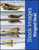 Ringed Seal Stock Photos - High Quality Images