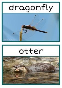 River Animals Photo Set