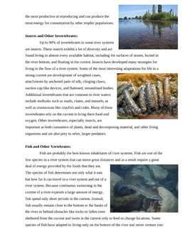 River Ecology and the River Continuum