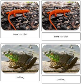 River Safari Toob Cards - Montessori