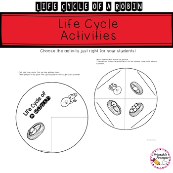Life Cycle of a Robin - Science Activities