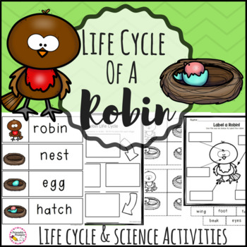 Life Cycle of a Robin
