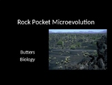 Rock Pocket Mouse Microevolution Instructional PPT
