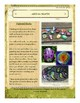 Rocks/Gems/Minerals Themed Nature Education Unit-Stage 2 (Magic Forest Academy)