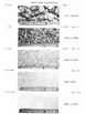 Rocks and Minerals Identification
